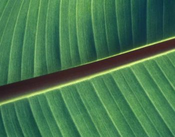 Bio-inspired materials
